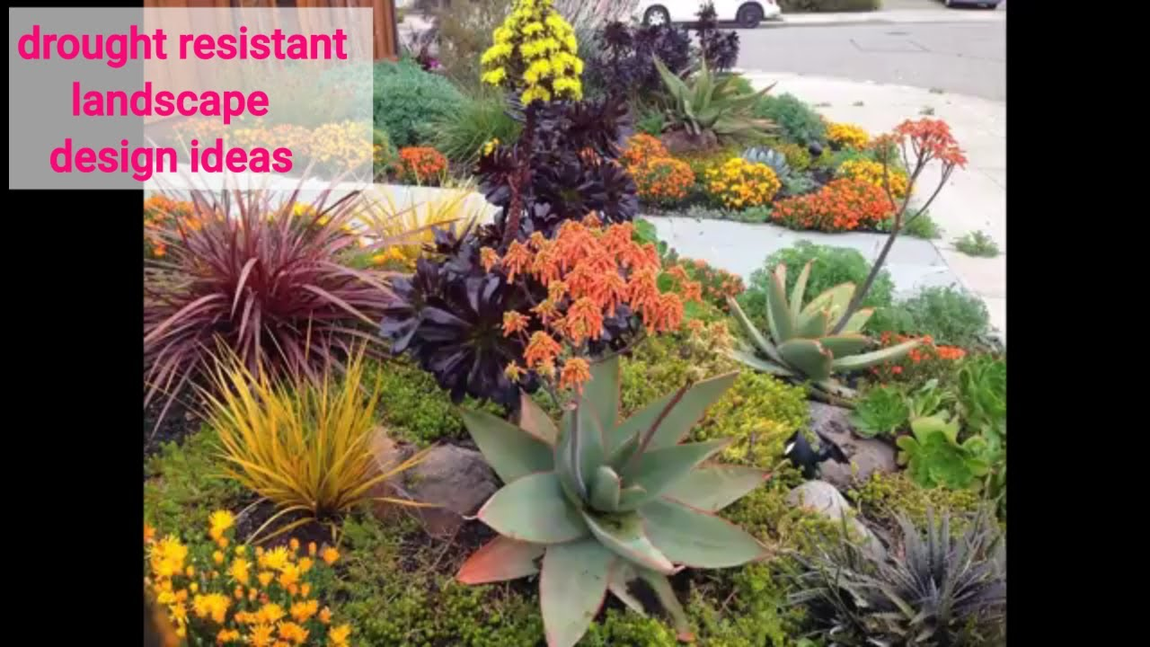 40+ Easy diy drought resistant landscape design ideas #7 - YouTube