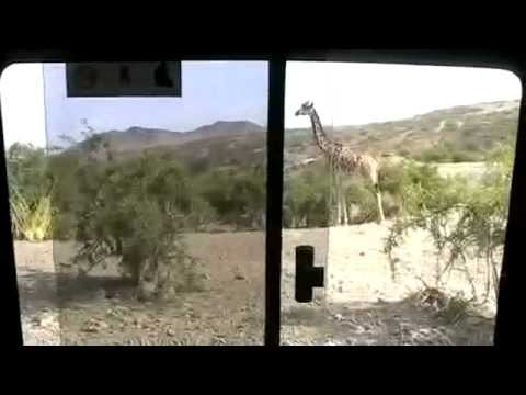 African Safari 4 - Olduvai (Oldupai) Gorge & Shifting Sands Ngorongoro
