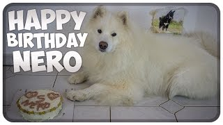 Nero wird 5 Jahre alt! Neros 5. Geburtstag! Happy Birthday Nero!!