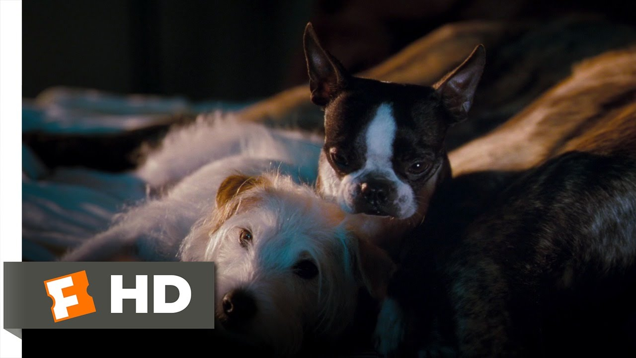 Hotel for Dogs (4/10) Movie CLIP - Better Here Than the ...