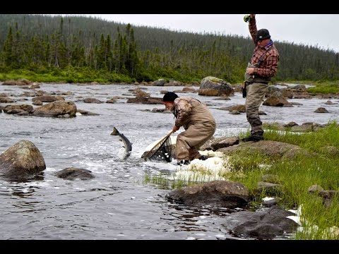 Atlantic Salmon Dry Fly Fantasy | Arluk Outfitters Newfoundland