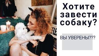 Самая Лучшая Собака! МОЯ ИСТОРИЯ!