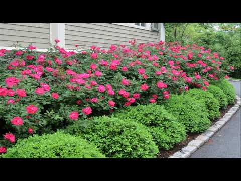 Small Front Yard Landscaping Ideas Garden Design Ideas Great