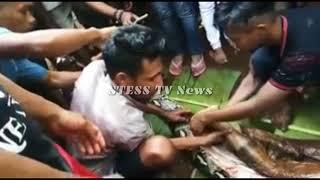 [STESS TV News] Indonésie – Une Avalée Par Un Python Géant