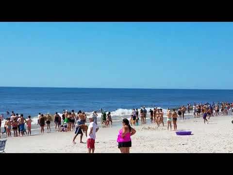 Whale Watching at Robert Moses - 8/20/17