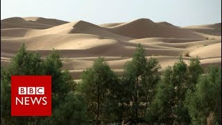 Why Is Africa Building A Great Green Wall Bbc News