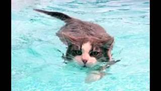 Почему кошки боятся воды?