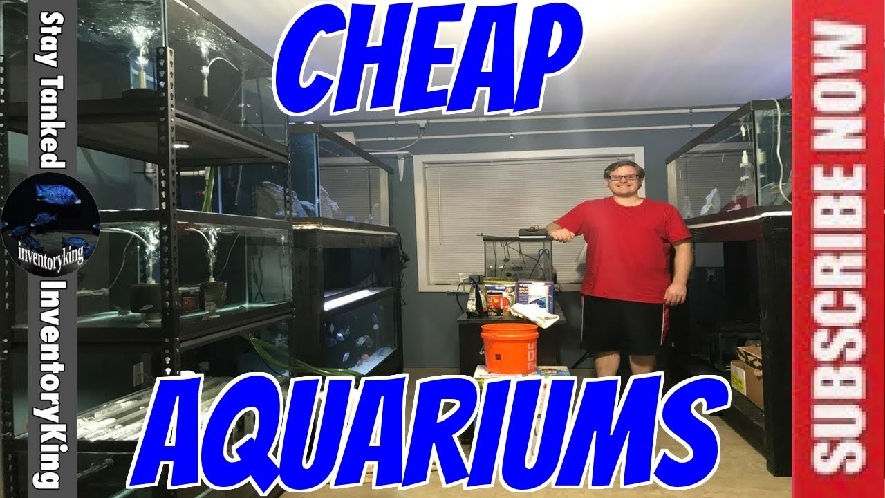 Can't Afford A Large Aquarium ? There Is A Way You Can Afford Monster Tanks