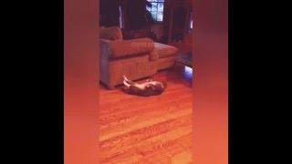"""Кот не может встать""""!?!!!"""