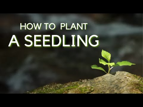 How to Plant a Seedling