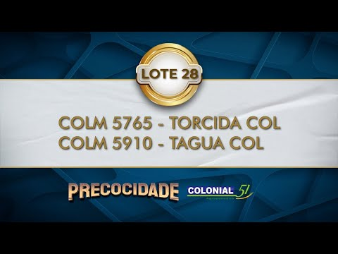 LOTE 28   COLM 5765, COLM 5910