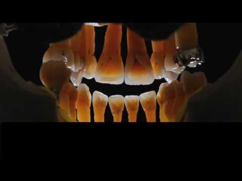 Niche Dental Studio (Form Book) joshua polansky