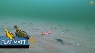 Flat Matt - Westin-Fishing