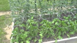 Garden Update #2 - Square Foot Gardening Raised Bed Vegetable Raw Food Garden Harvest