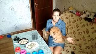 Чем я кормлю собак ?