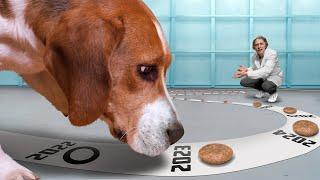 Сколько кусочков корма съест собака, если её не останавливать?