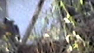 Videos Rona 0006