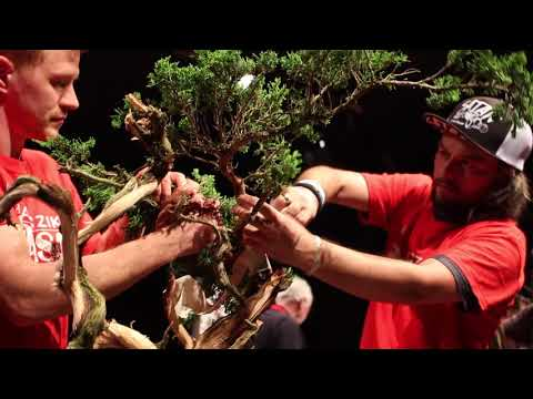 Milan Karpíšek Bonsai demo