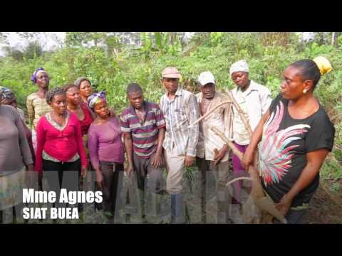 AGRO-HUB CAMEROON- CASSAVA TRANSFORMATION
