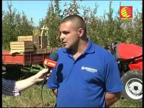 TV ORBIS - AGROBAROMETAR - ZAPOCNA BERBATA NA JABOLKATA VTOR DEL 29 09 2013