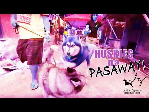 Huskies na pasaway!!!