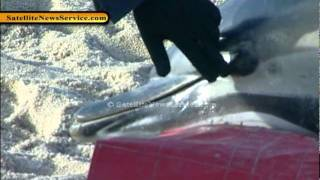 Mass Dolphin Strandings on Cape Cod (01-16-12)