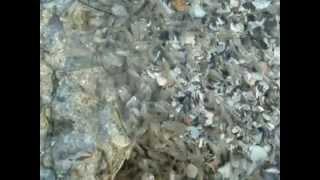 Азовское море! Креветки!(Азовское море! Креветки!, 2012-06-10T20:13:03.000Z)