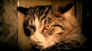 Кошка слушает Rumance и грустит.