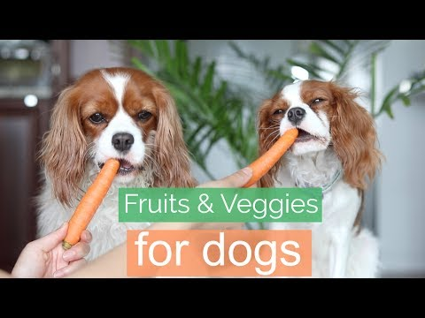 Fruits & Veggies For Dogs | Healthy Dog Treats | Herky the Cavalier