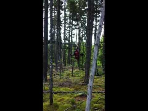 Maine Forestry - Processor/Harvester