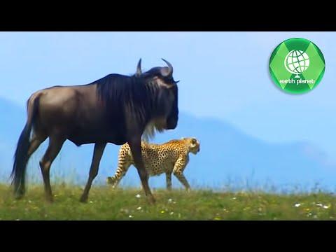 WILDLIFE IN SERENGETI | PART 3 | SD QUALITY | EN
