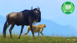 WILDLIFE IN SERENGETI | PART 3 | SD QUALITY | EN