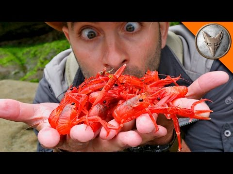 Red Crab Invasion!