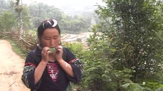Hmong Trekking Guide at Sapa Valley Hanoi Vietnam