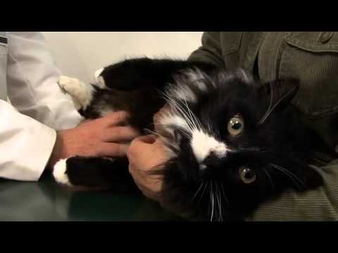 Cat Owner's Guide To Kidney Diseases - Part 1