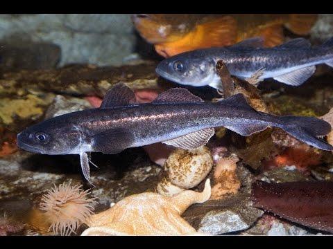 Arctic Marine Life Course (Fishes and Invertebrates)