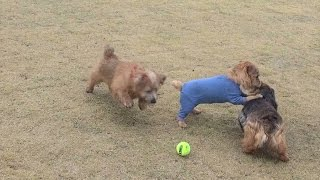 レグ君、サニーちゃん、ちゃいのボールを巡る攻防戦です。