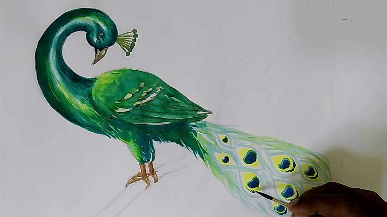 How To Draw Peacock In Water Colour Youtube