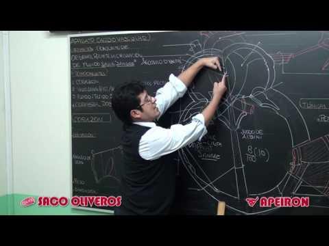 Video Clases: Biología - Aparato cardiovascular