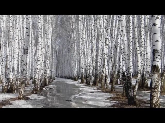 Изображение предпросмотра прочтения – ЕленаБудилова читает отрывок изпроизведения «Ещё земли печален вид…» Ф.И.Тютчева