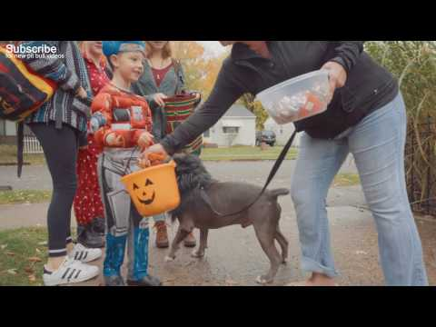 Kids React to a Pit Bull Rescue Dog that was labled
