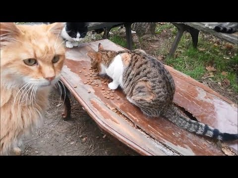 Stray cats playing and eating food with each other
