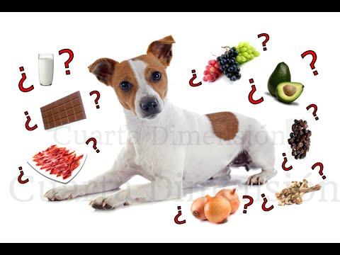 Los alimentos mas peligrosos para los perros top 10 alimentos prohibidos youtube - Alimentos recomendados para perros ...