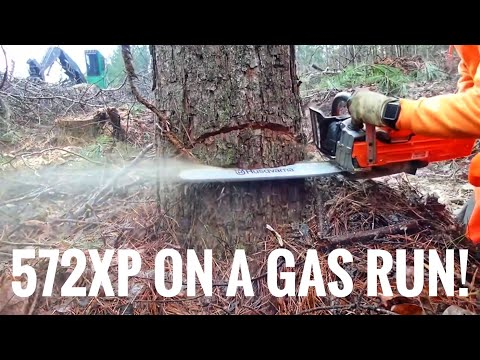 New Husqvarna 572xp cutting 18 trees on one tank of gas! #husqvarna #chainsaw #logger