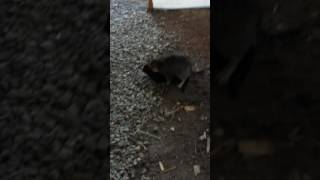 Спаривание котов 18+