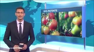 weil seine Tomatenpflanzen nicht zugelassen sind, verkauft Gärtner sie als Zierpflanzen
