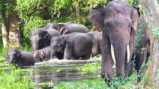 What elephants do in the wild