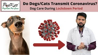 Dog Care During Lockdown Period Due To COVID - 19 ( Coronavirus ) | Dr. Anirudh Mittal