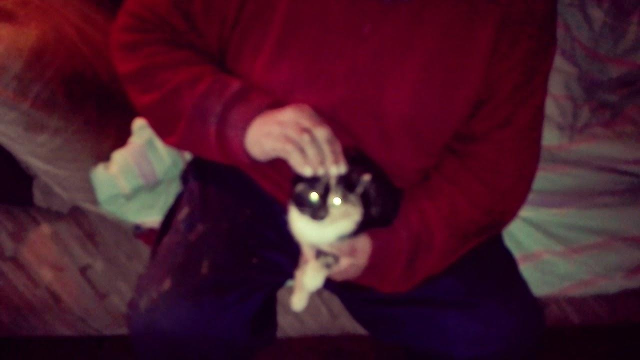 Kissi Video - YouTube
