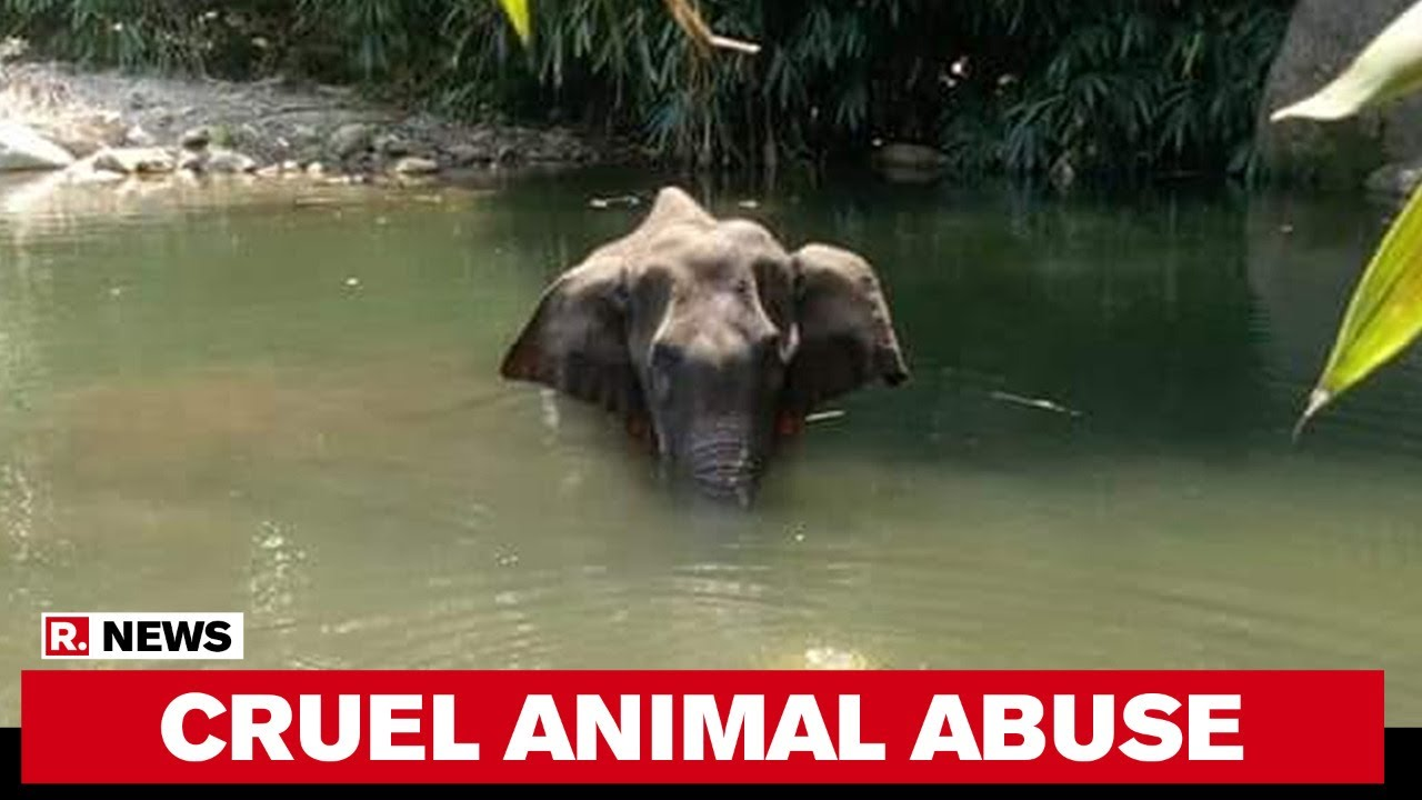 Kerala Pregnant Elephant Dies In River After Being Fed Pineapple